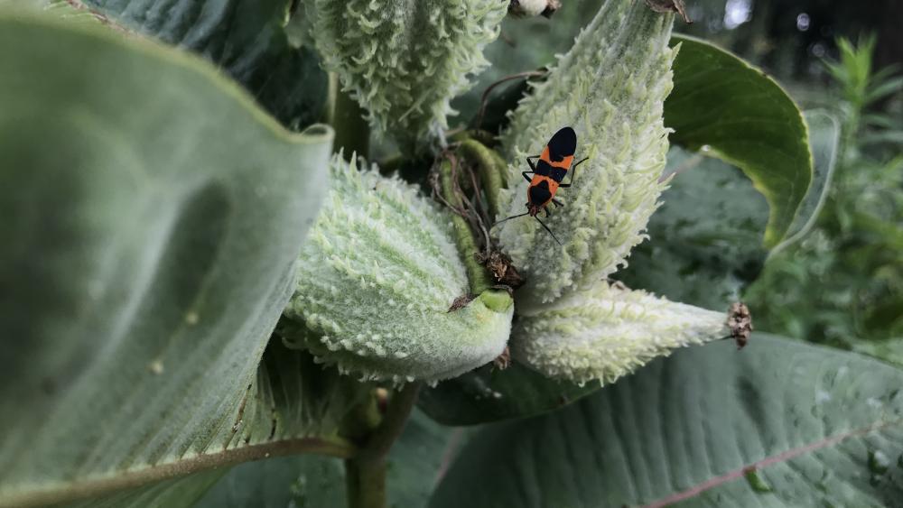 Bug on fruits wallpaper