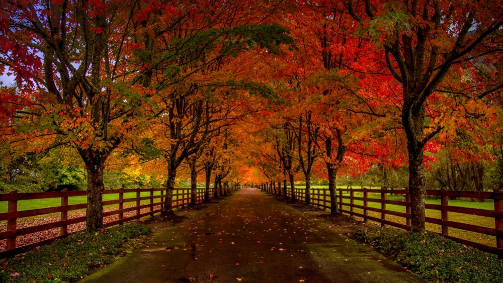 Autumn country side road wallpaper