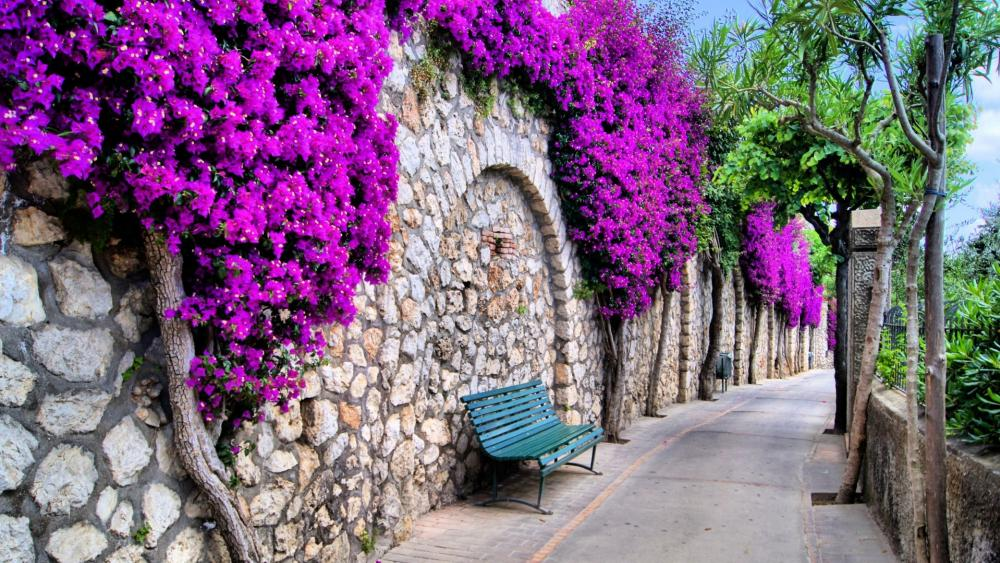Pathway bench in Capri wallpaper