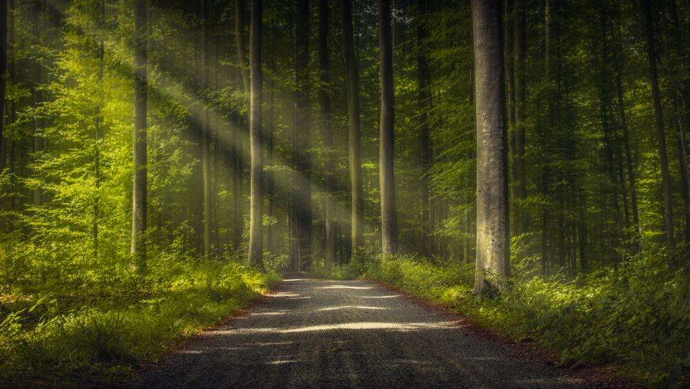 Thick forest wallpaper