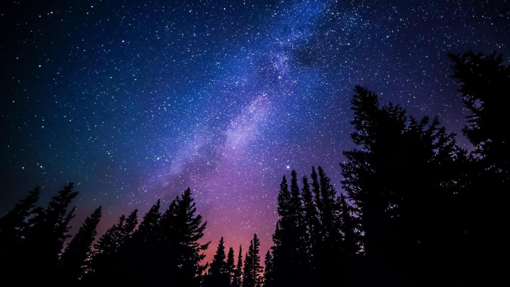 Milky way above pine trees wallpaper
