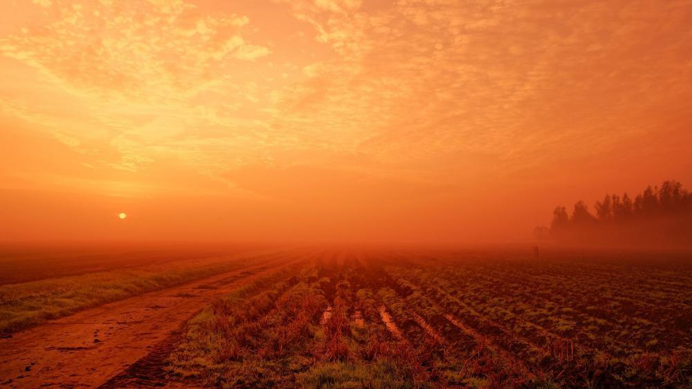 Red sky at morning wallpaper