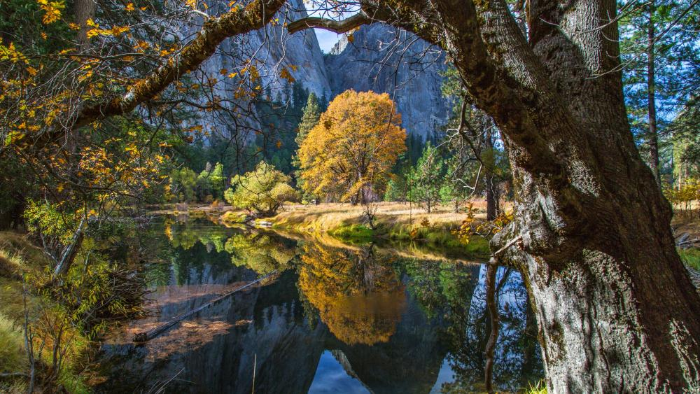 Merced River in Yosemite Valley wallpaper