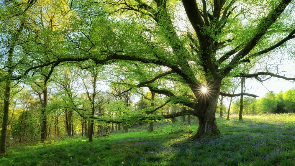Sunshine in the spring forest wallpaper
