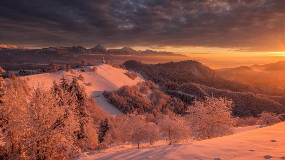 The sunrise of the forest in winter wallpaper