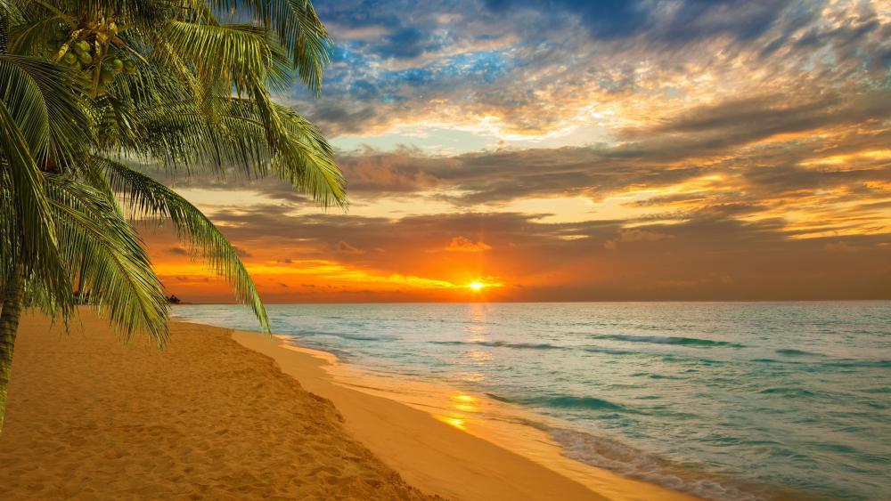 Kovalam Beach sunset wallpaper