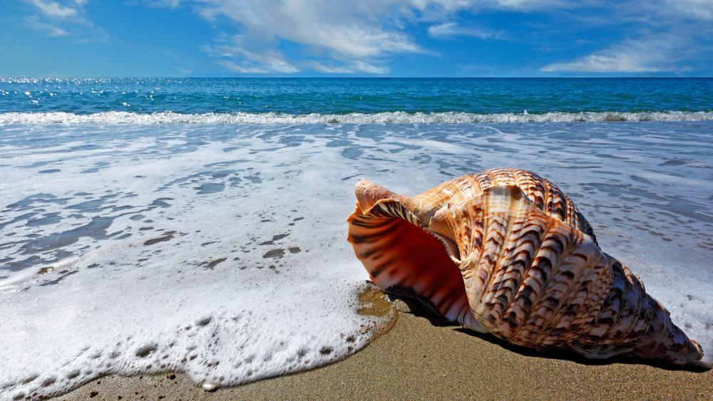 Seashell in the foamy waves wallpaper