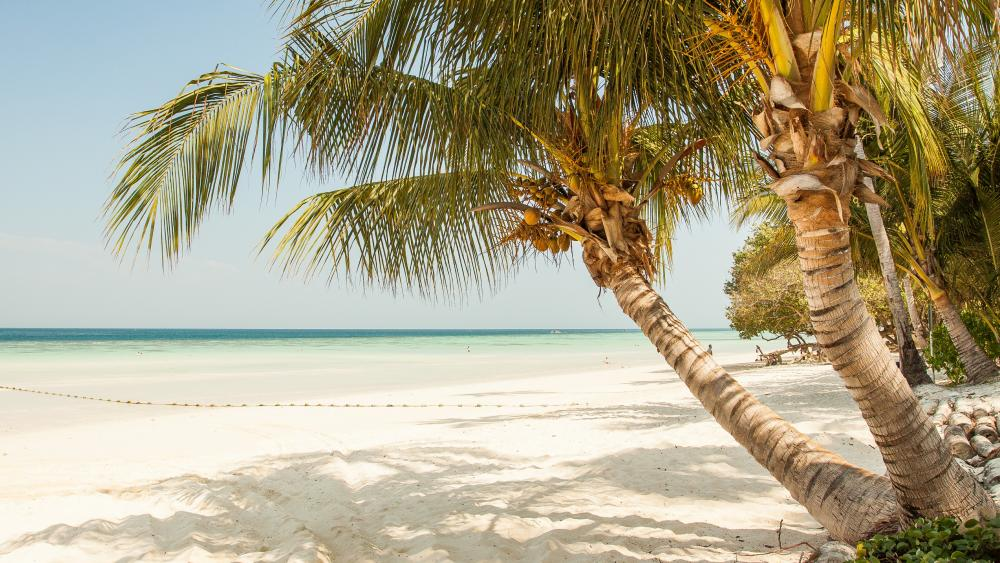 Fantastic sandy beach with palms wallpaper