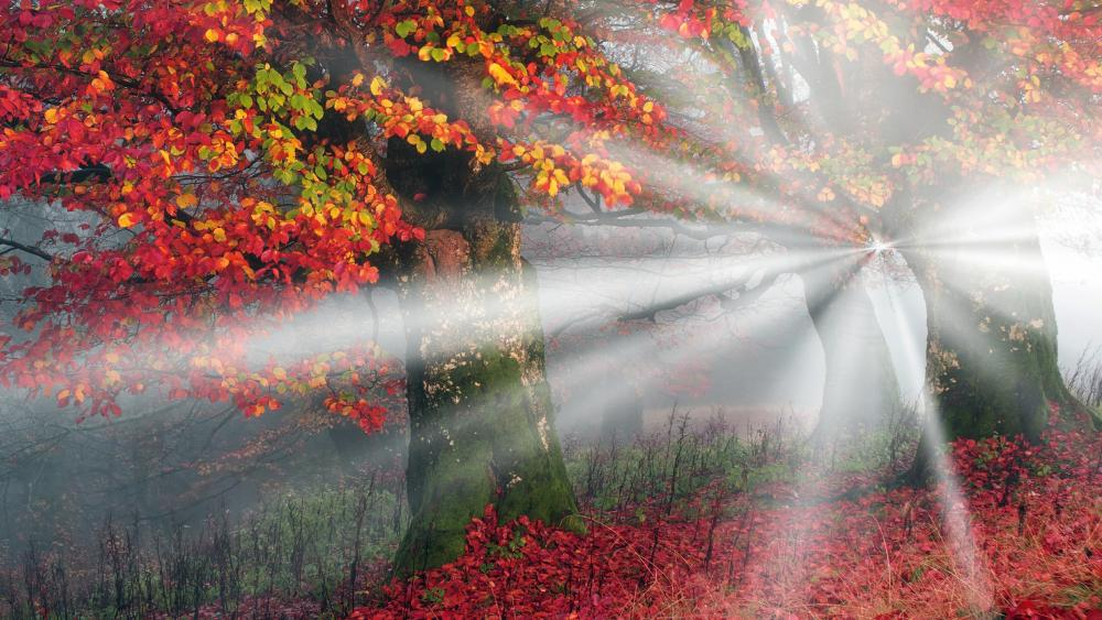 Autumn sun rays wallpaper
