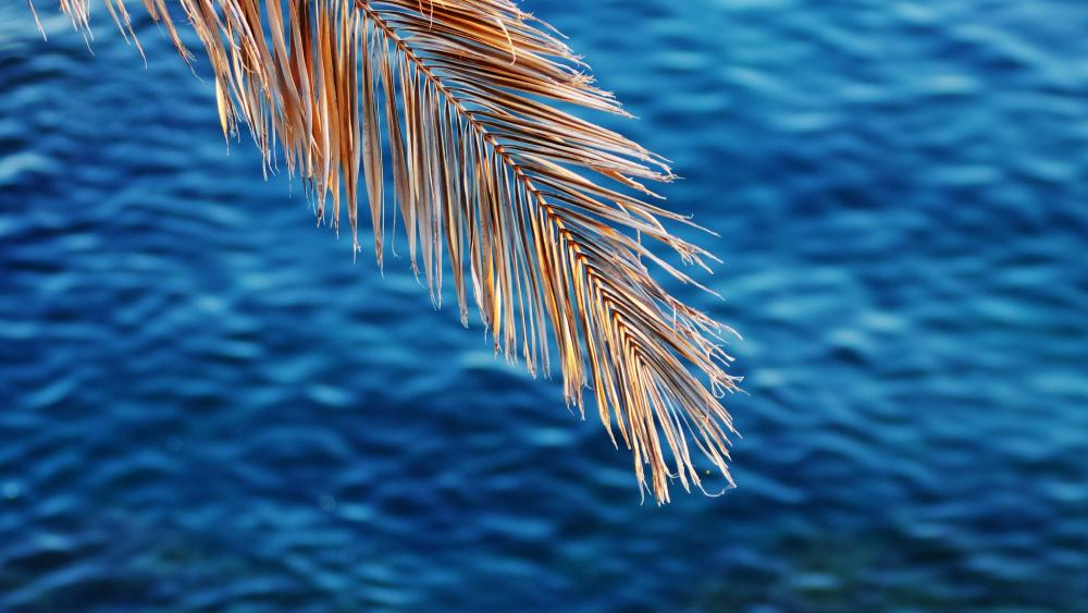 Palm leaf over the blue watar wallpaper