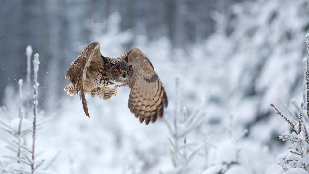 Owl flying in the winter wallpaper