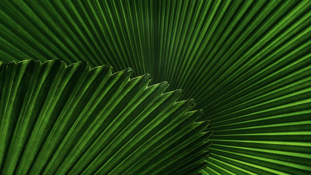 Saw palmetto leaf wallpaper