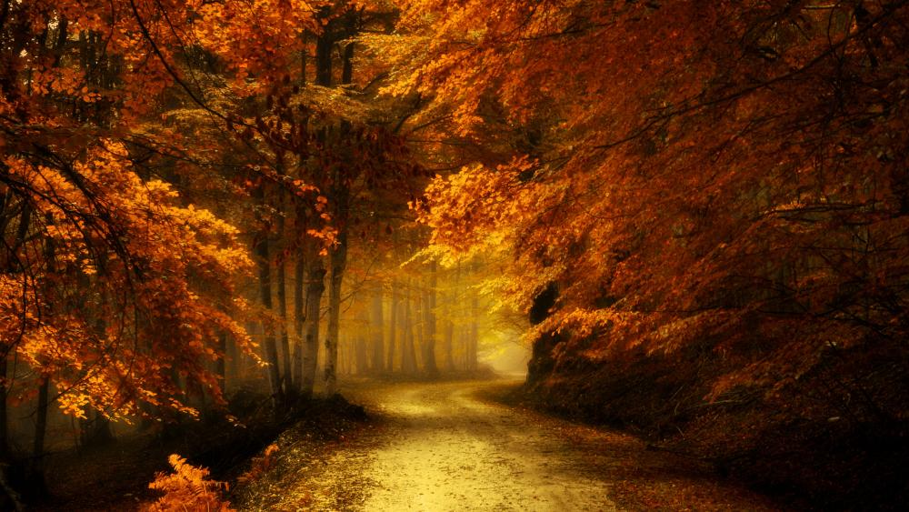 Autumn forest road wallpaper