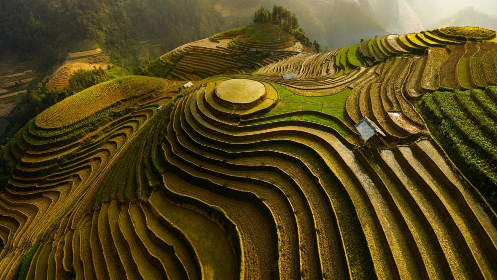 Mu Cang Chai rice terraces wallpaper