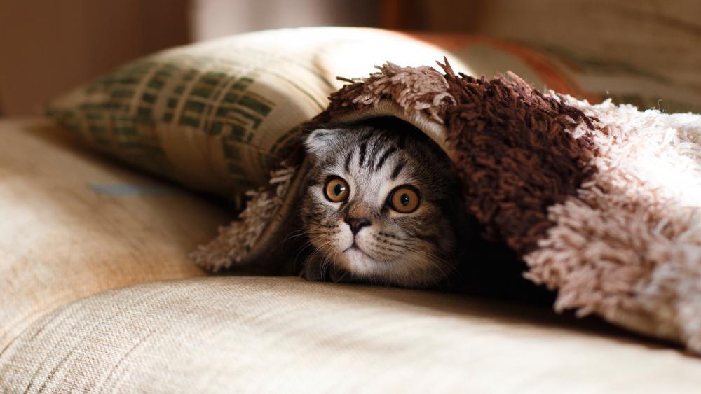 Cat under the blanket wallpaper