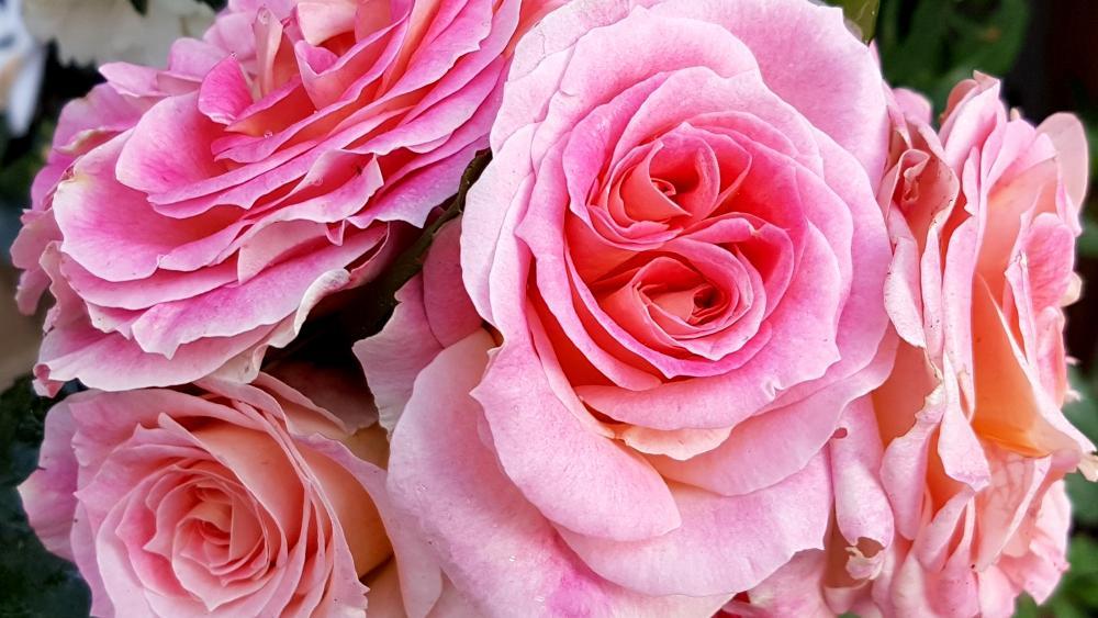 Roses Bouquet wallpaper