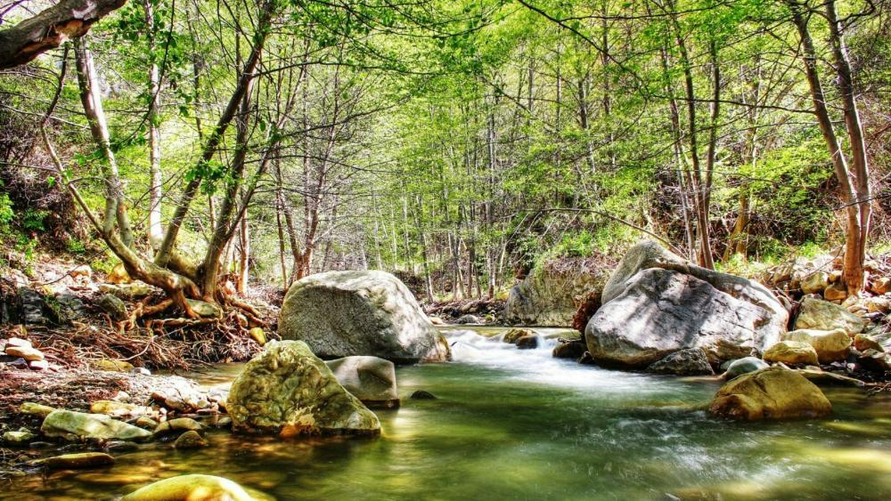 Spring forest creek wallpaper