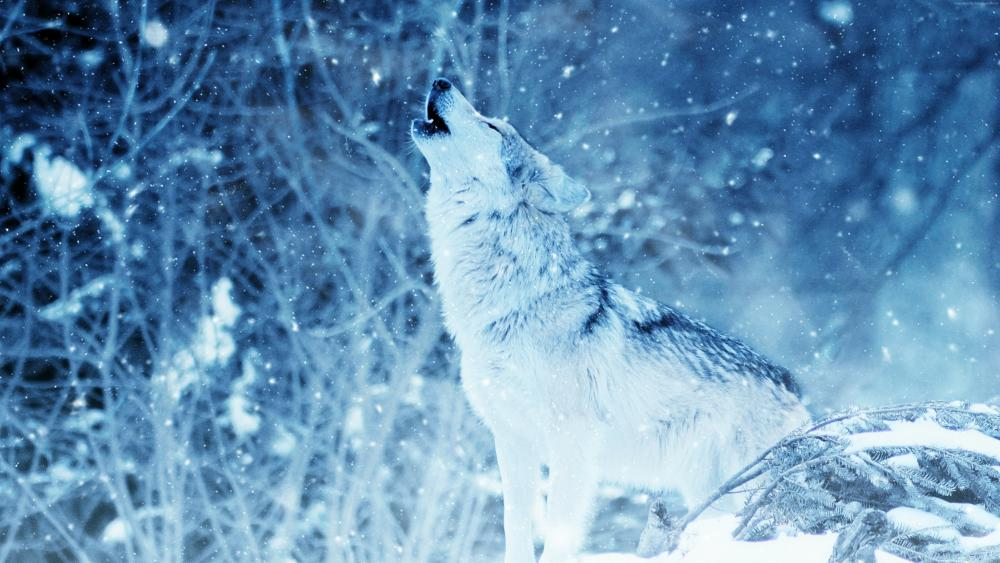 A howling wolf in the snowfall wallpaper