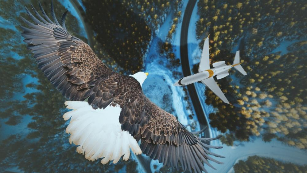 Bald eagle and an airplane wallpaper
