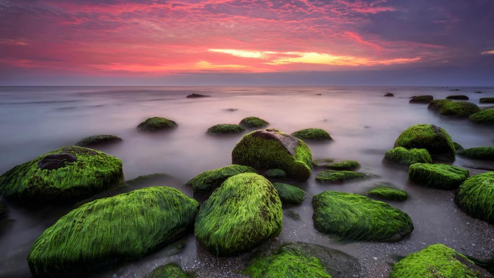 Moss on a boulder wallpaper