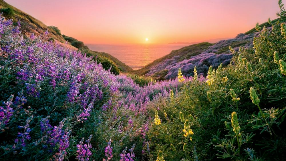 Spring flower carpet in the valley at sunset wallpaper