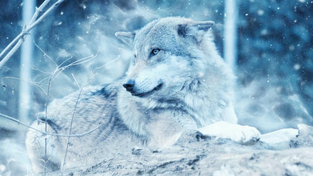 Wolf in winter wallpaper