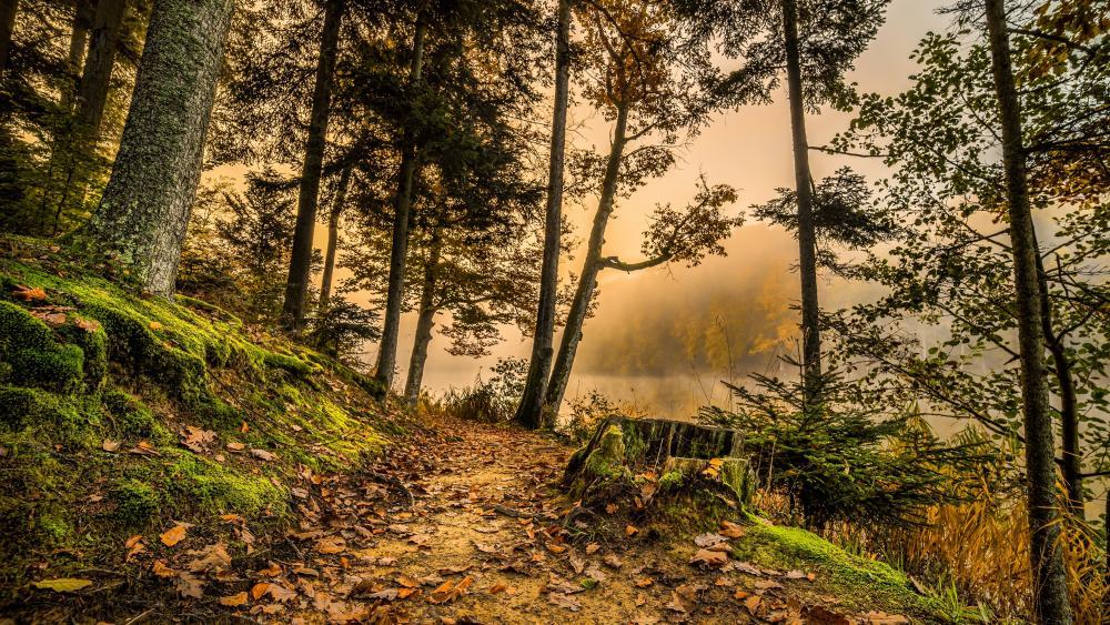 Riverside forest path wallpaper