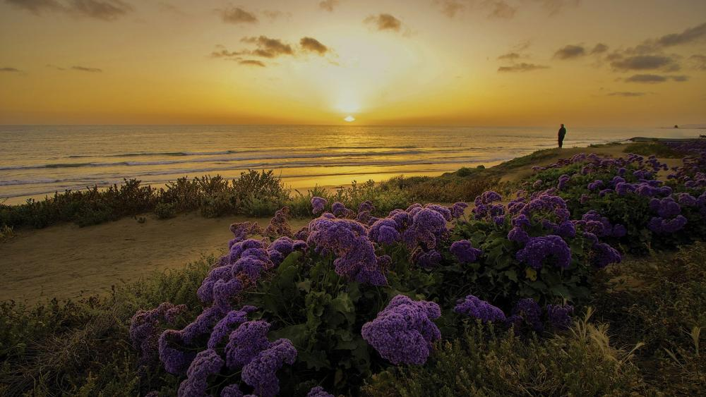 Sunset from the coast of San Diego wallpaper