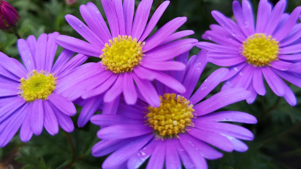 Purple Flowerpower wallpaper
