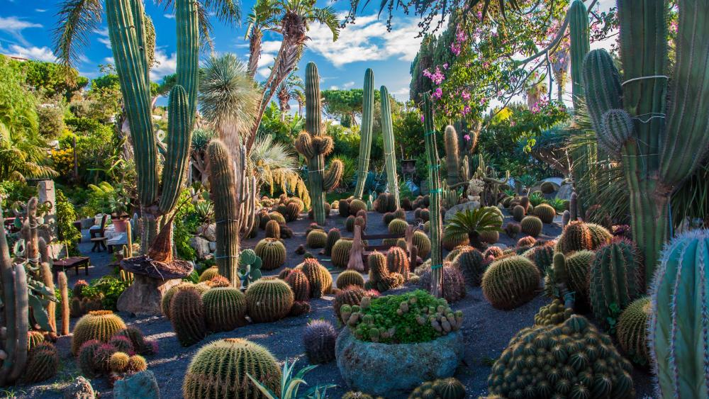 Cactus in the garden wallpaper