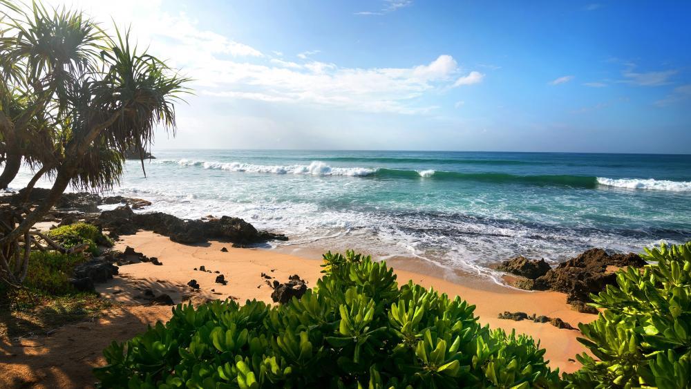 Tropical summer beach wallpaper