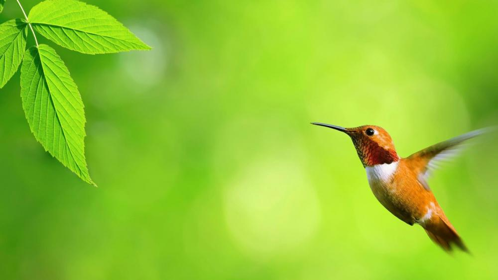 Hummingbird floating in the air wallpaper