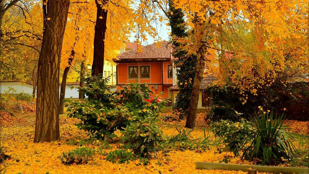 Yellow ginkgo foliage wallpaper