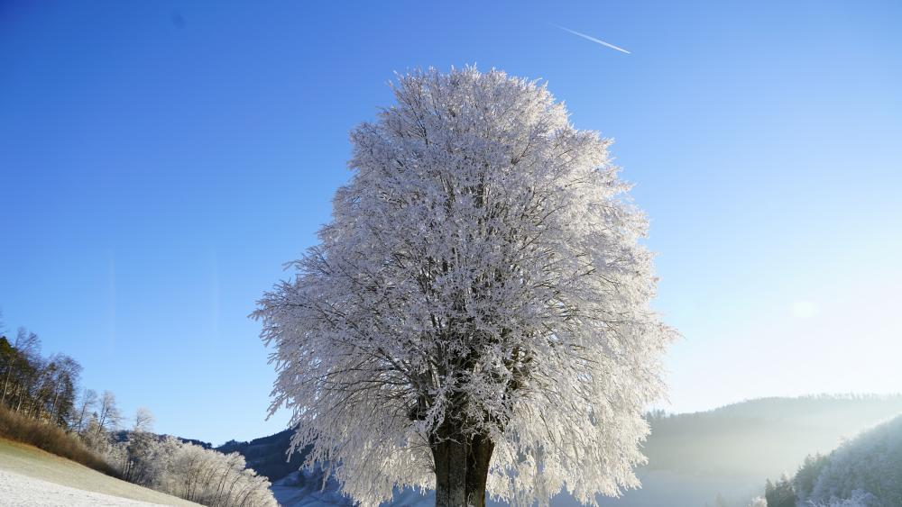 Frozen lonely tree wallpaper