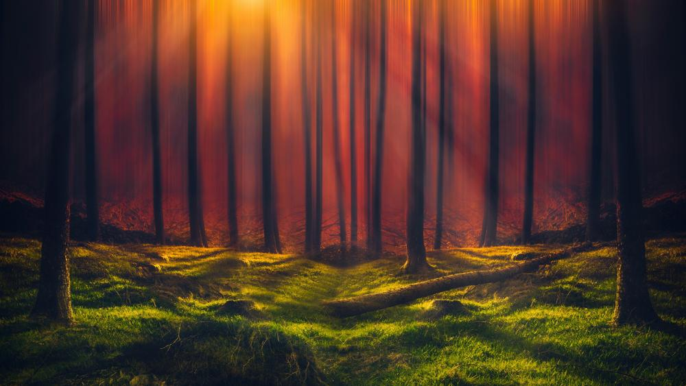Sunshine through the forest wallpaper