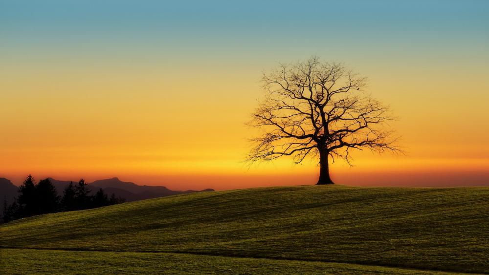 Lone tree in the hill wallpaper