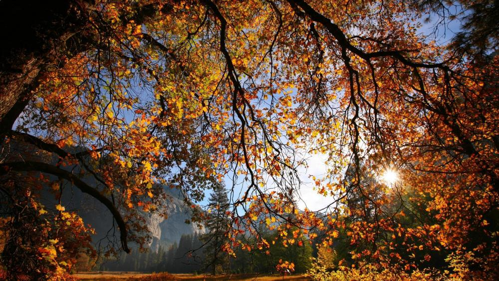 Autumn sunshine wallpaper