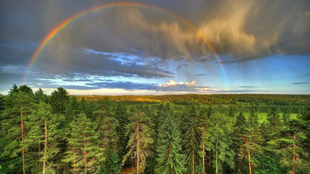 Rainbow over the forest wallpaper