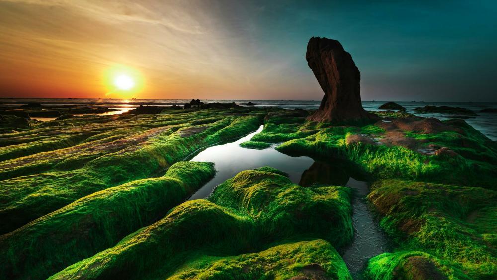 The mossy Co Thach beach (Vietnam) wallpaper