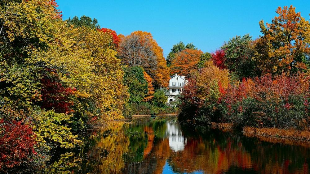 White house among the fall trees wallpaper