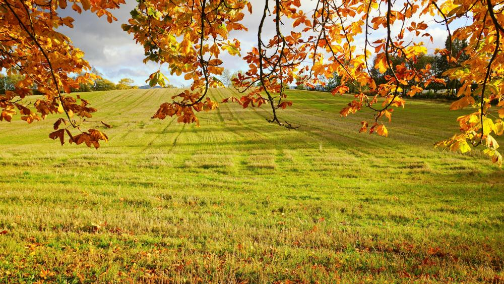 Grassland at fall wallpaper