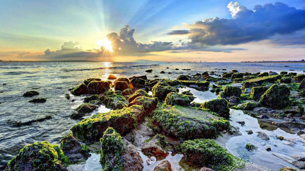 Mossy stones on the seashore wallpaper