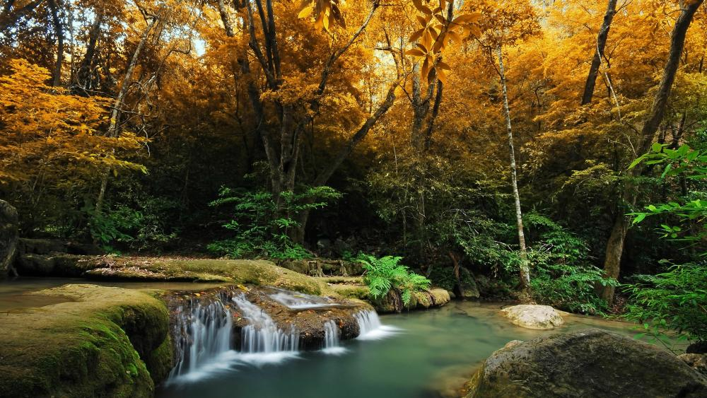 Fall forest creek waterfall wallpaper