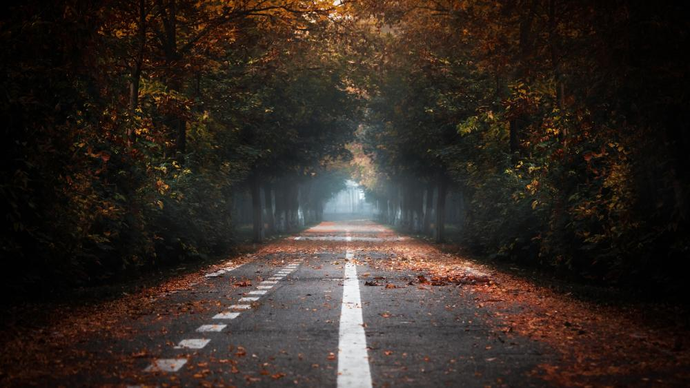 Autumn road in the forest wallpaper