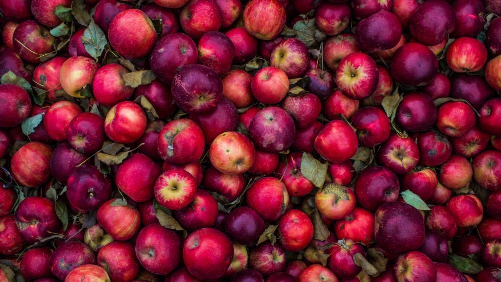 A lot of apples wallpaper