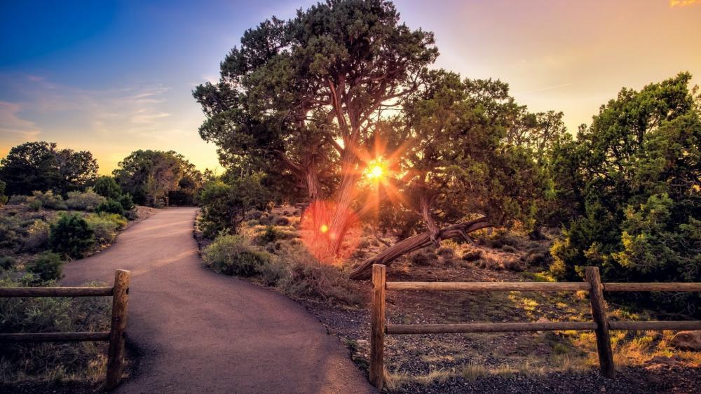 Sunset through the trees wallpaper