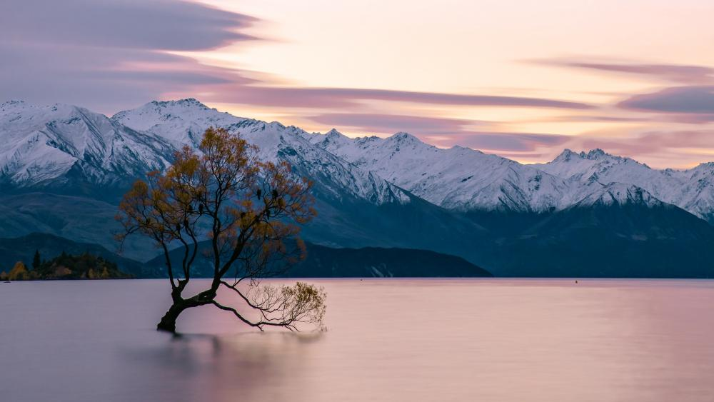 Lone tree in the middle of the Lake Wanaka wallpaper