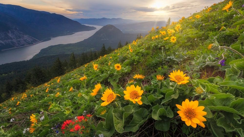 Dog Mountain (Columbia River Gorge) wallpaper