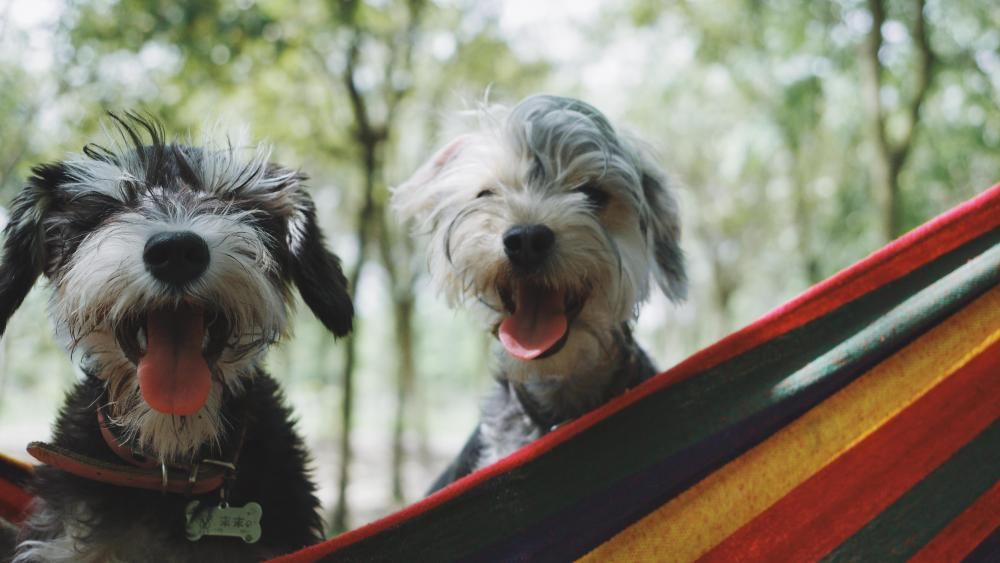 Two cute puppies wallpaper