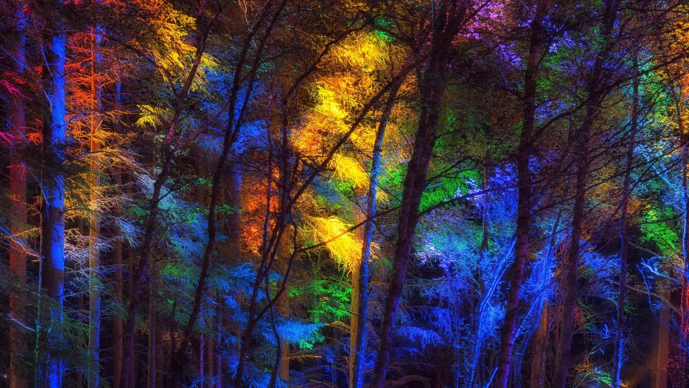 Colorful forest lights wallpaper